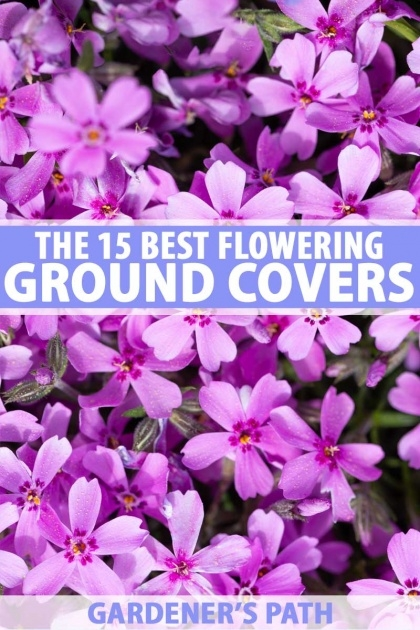 Perfect Ground Cover Plants Photo