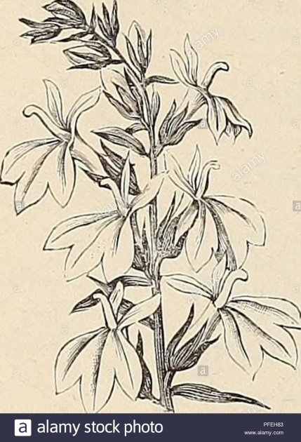 Perfect Herbaceous Plants List And Pictures Photo