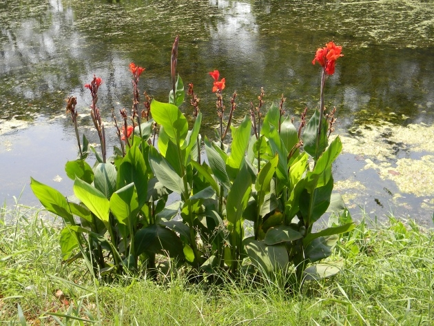 Perfect Name Of Tropical Plants With Pictures Picture