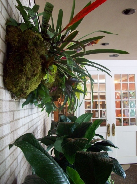 Perfect Orchid Wall Planter Image