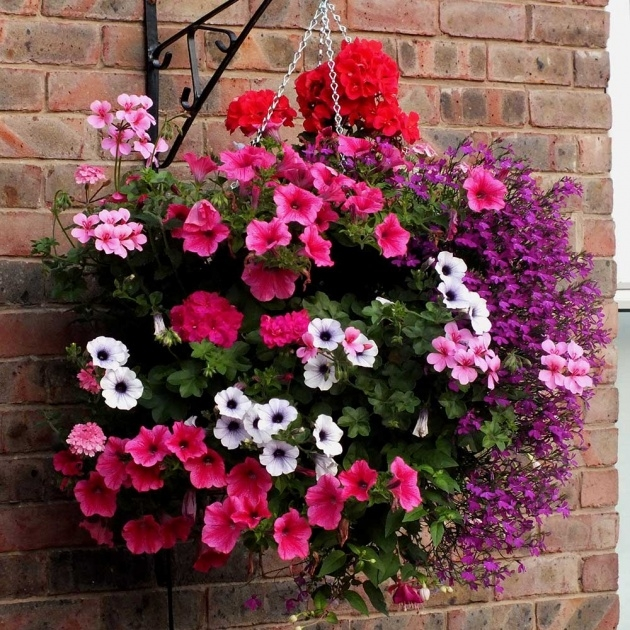 Perfect Pictures Of Trailing Plants For A Hanging Basket Image