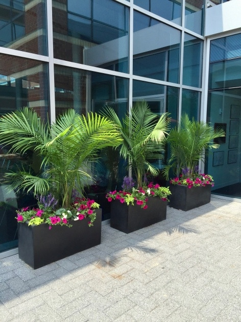 Perfect Plants For Planter Boxes Image