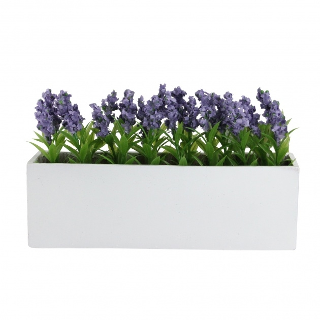 Perfect Potted Flowering Plants Photo