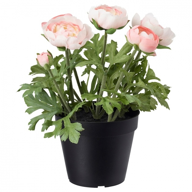 Perfect Potted Flowering Plants Picture