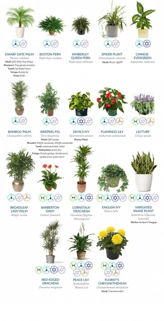 Perfect Purifying Home Plants Image