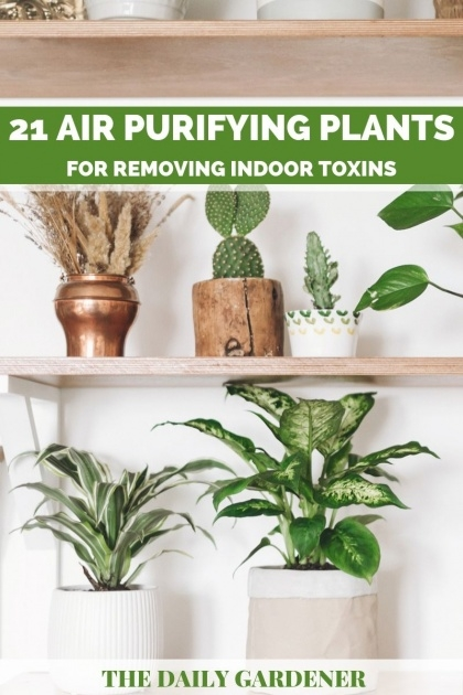 Popular Air Purifying Indoor Plants Picture