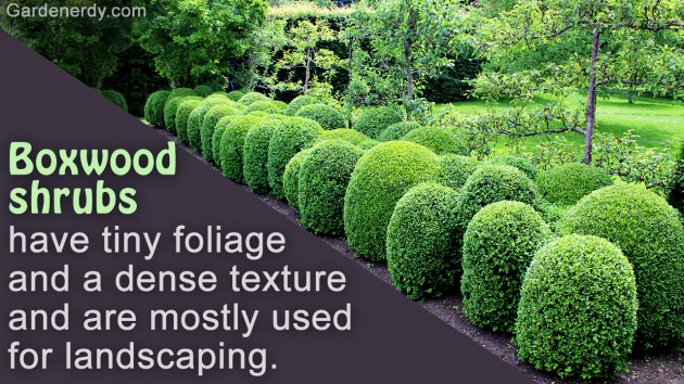 Popular Most Popular Landscaping Shrubs Picture