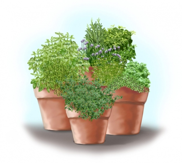 Popular Planting Herbs In Pots Image