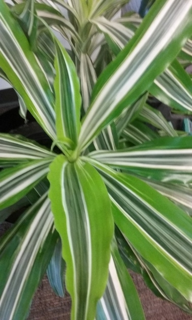Remarkable Names Of House Plants With Pictures Image
