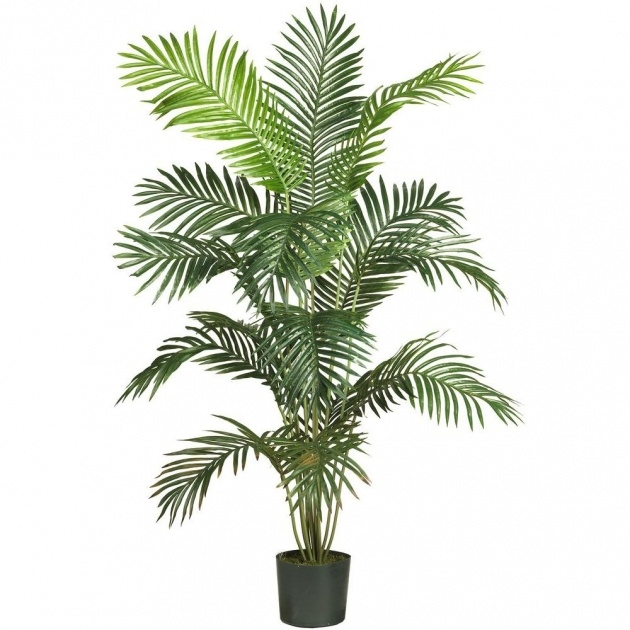 Remarkable Palm Tree Plant Picture