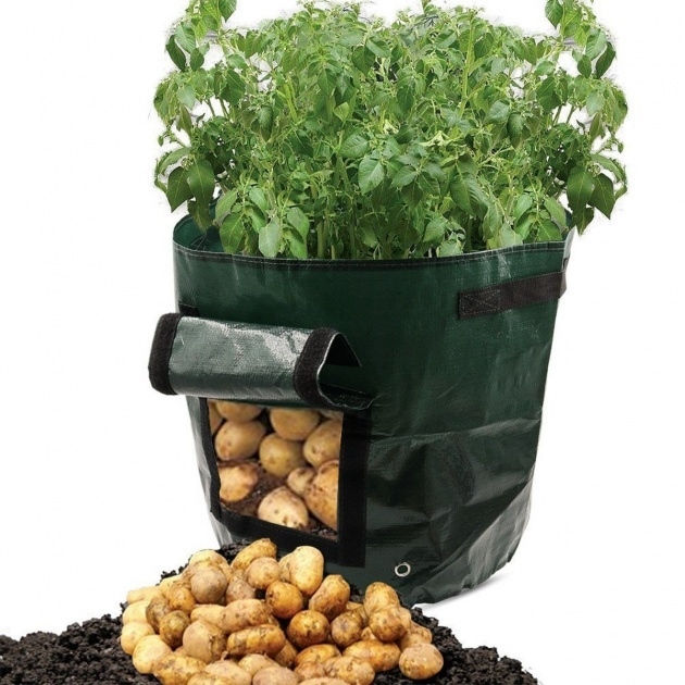 Remarkable Planting Potatoes In Bags Picture