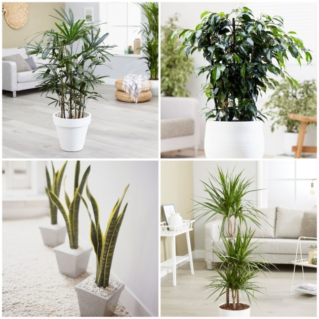 Remarkable Purifying Home Plants Picture
