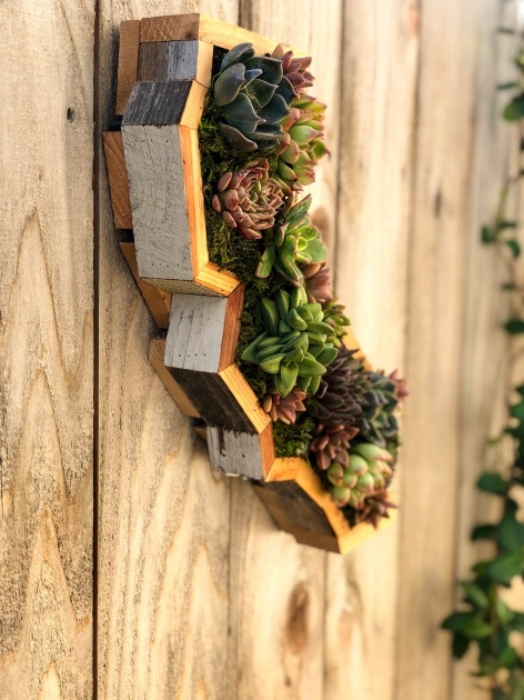 Remarkable Succulent Wall Planter Image