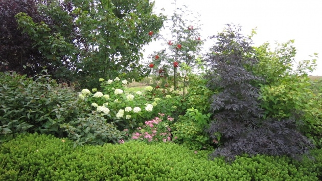 Remarkable Tall Shrubs For Shade Picture