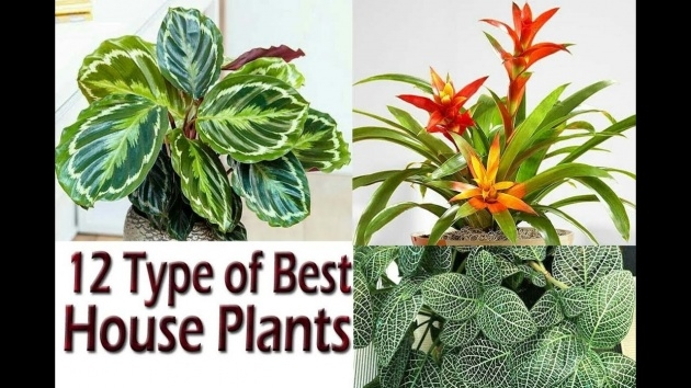Sensational Names Of House Plants With Pictures Image
