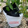 Poly Planter Bags
