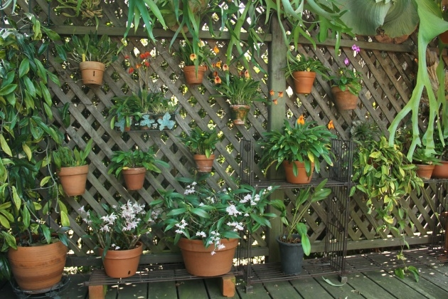 Sensational Small Lattice For Potted Plants Picture
