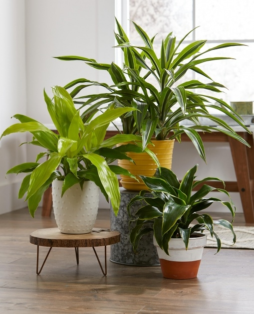 Simple Green House Plants Pictures Photo