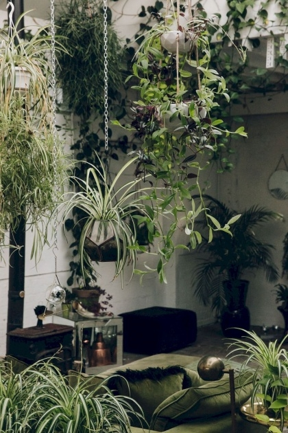 Simple Outdoor Hanging Plants Photo