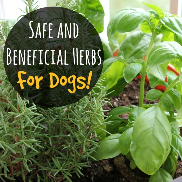 Simple Outdoor Plants Healthy For Dogs Picture