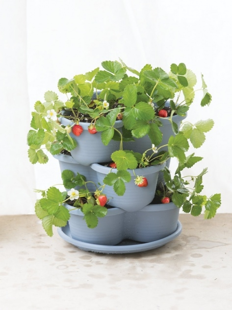 Simple Self Watering Strawberry Planter Image