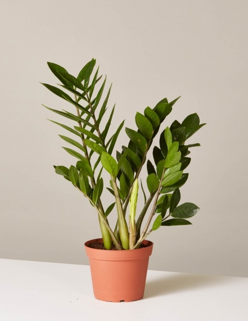 Splendid 25 Indoor Plants And Caring Tips Picture