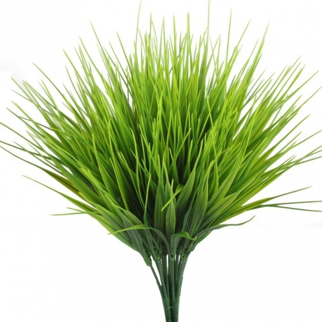 Splendid Indoor Grass Plants Photo