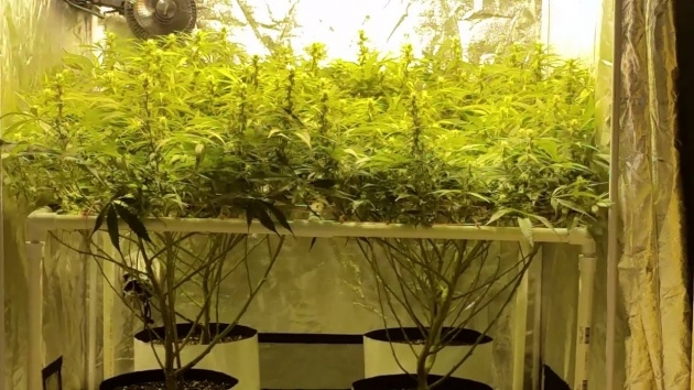 Stunning 4 X 4 Grow Tent Picture