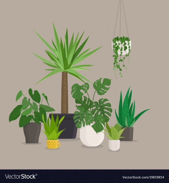 Stunning Green House Plants Pictures Photo
