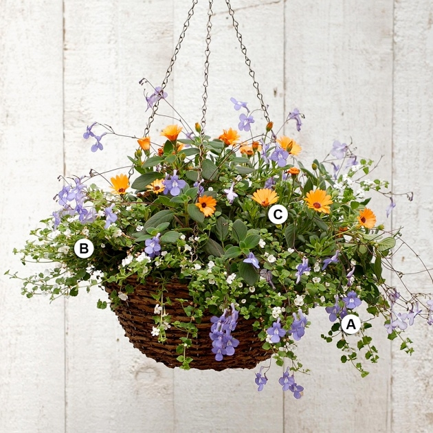 Stunning Hanging Basket Plants Picture