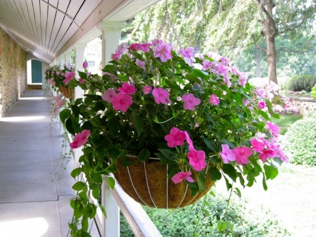 Stunning Pictures Of Trailing Plants For A Hanging Basket Photo