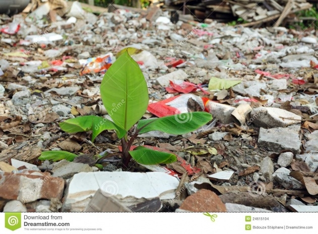 Stunning Plant And Pollution Photo