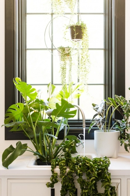 Stylish Bottom Watering Plants Picture