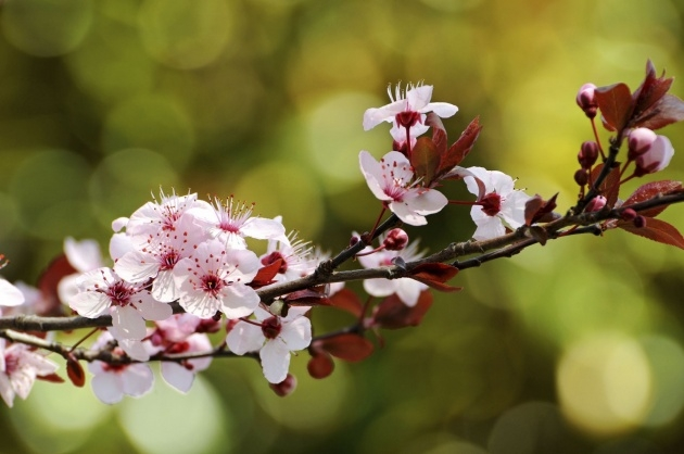 Stylish Flowering Trees List Picture