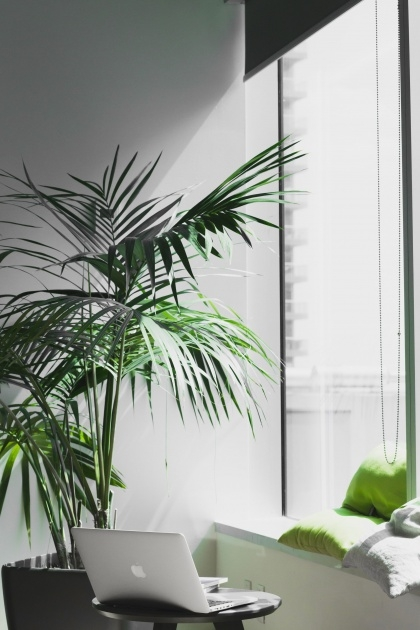 Stylish Good Indoor Trees Picture