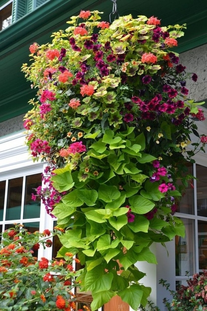 Stylish Hanging Perennials Flowers For Containers Photo