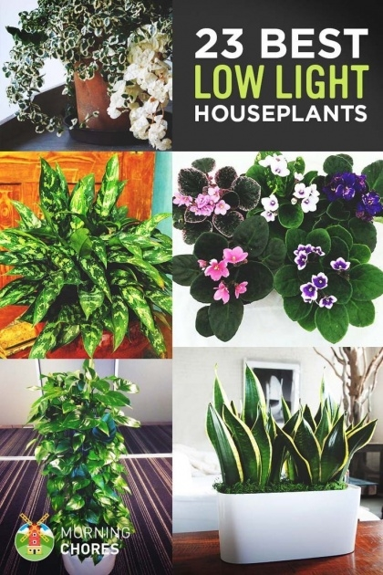Stylish Indoor Flower Plants Low Light Picture