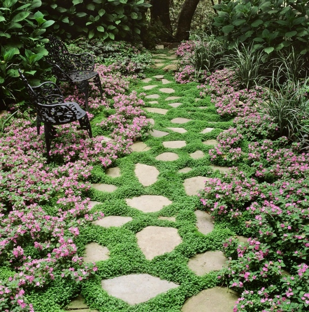 Stylish Low Profile Ground Cover For Between Pavers Photo