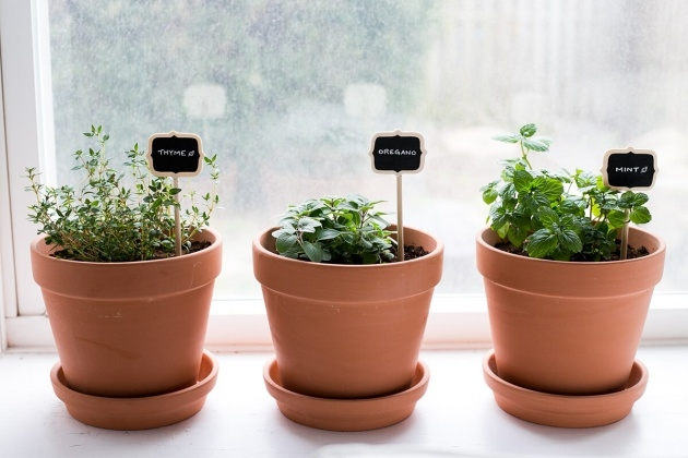 Stylish Planting Herbs In Pots Photo