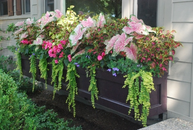 Stylish Plants For Planters In Shade Photo