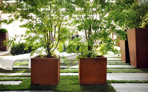Stylish Trees In Planters Photo