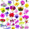 Types Of Flowers In Hindi