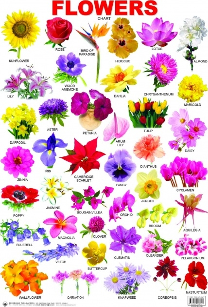 Stylish Types Of Flowers In Hindi Picture