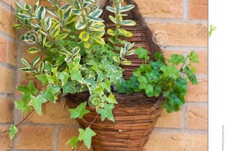 Wall Baskets For Plants