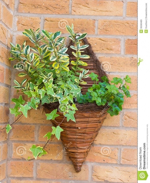 Stylish Wall Baskets For Plants Picture
