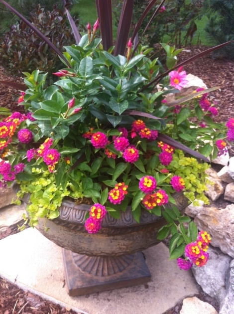 Super Cool Container Gardens For Full Sun Picture