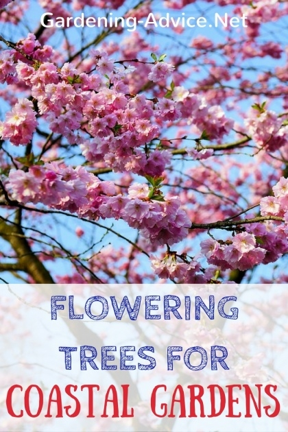 Super Cool Flowering Trees List Picture