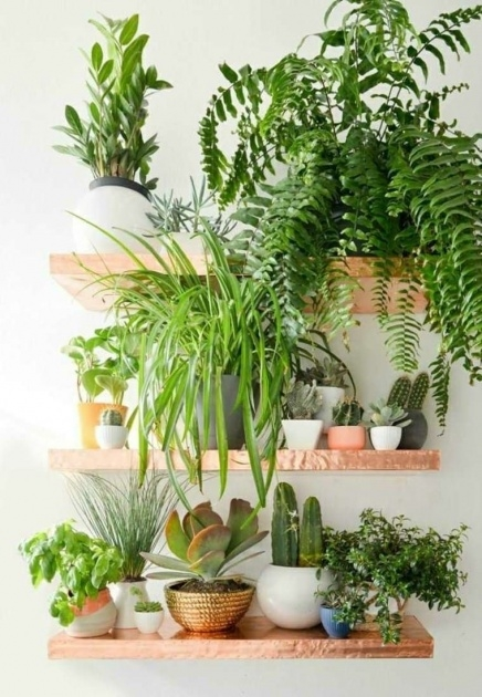 Super Cool Plants For Small Spaces Photo