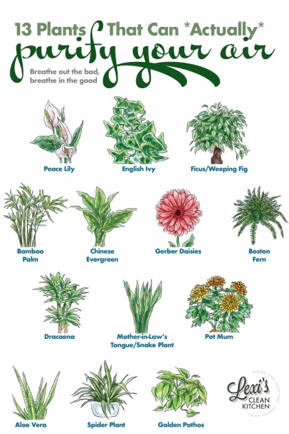 Super Cool Purifying Home Plants Image