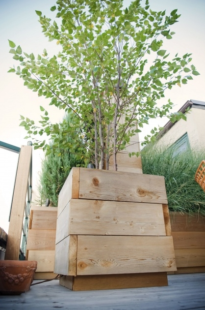 Super Cool Trees In Planters Photo